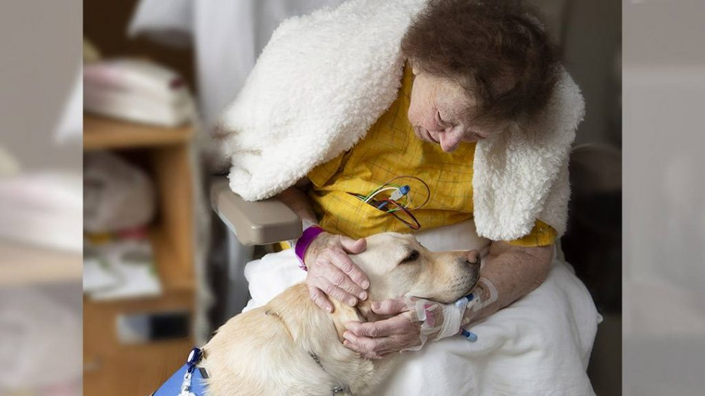 With her warm brown eyes, big floppy ears and calming presence, Luna, a trained facility dog, spends her days bringing cheer to Mayo patients.
